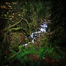 Multnomah Creek I by Tula Top