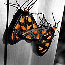 Orange Mono Moths by Masterclass