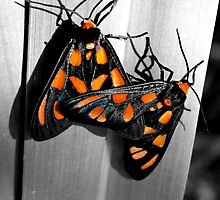 Orange Mono Moths by Masterclass