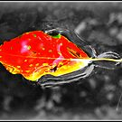 Floating Leaf by Masterclass