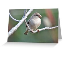 Female house sparrow Greeting Card