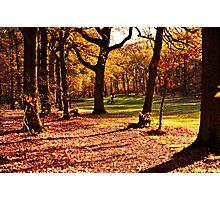 Golden golfers Photographic Print