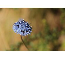 Bush Flower Photographic Print