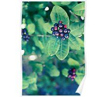Tropical Berries Poster