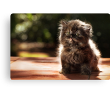 ...and whiskers on kittens... Canvas Print