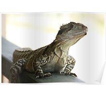 lizard mt barney Poster