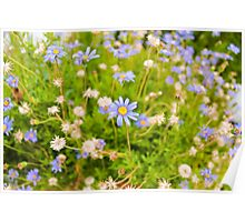 Tiny flowers Poster