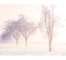 Winter orchard, Kenn, North Somerset. Photographic Print