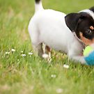 Sammie at Play by Gregory Ballos | gregoryballosphoto.com
