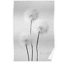 Dandelion in black & white Poster