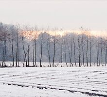 Winter fields with snow and trees by Robert Down