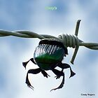 A Dung Beetle caught in the wind. by Cindy Rogers