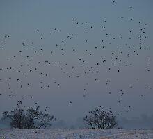 FLOCK OF BIRDS IN WINTERS MORNING  by innitman
