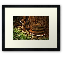 Artist's bracket at the foot of a tree  Framed Print