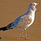 GET OFFA MY BEACH by Robin Lee