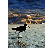 Shorebird in the Morning Photographic Print