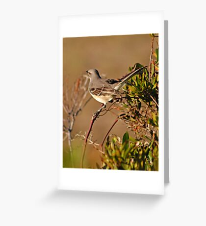 Mockingbird in Salvo Greeting Card