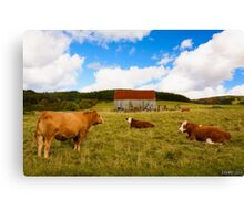 Cows of Mabou Canvas Print