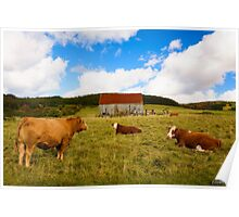 Cows of Mabou Poster
