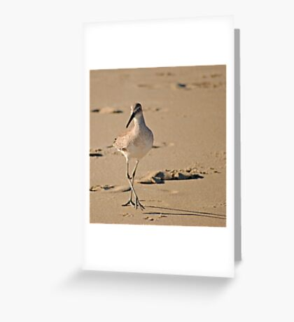 Dainty Willet Greeting Card