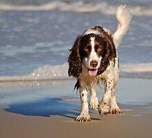 Beach Pup by Robin Lee