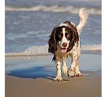 Beach Pup Photographic Print