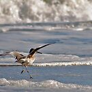 Clumsy Willet by Robin Black