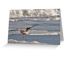 Clumsy Willet Greeting Card