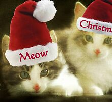 Meow Meow Christmas From Us!!! © by Dawn M. Becker