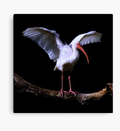Bird On A Log ~ Part One Canvas Print