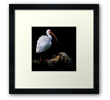 Bird On A Log ~ Part Two Framed Print