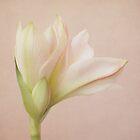 fleur poétique by Iris Lehnhardt
