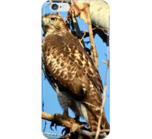 Red Tailed Hawk in Tree iPhone Case/Skin