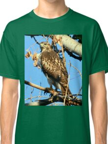 Red Tailed Hawk in Tree Classic T-Shirt