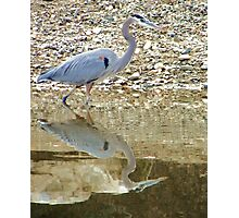 On the Hunt Photographic Print