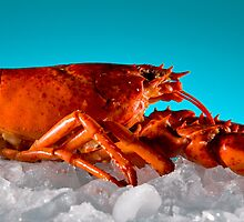Lobster on Ice by supersnapper