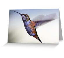 Female Rufous Hummingbird Greeting Card