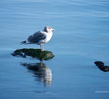 Jonathan - Seagull or A Relative Perhaps? by Jack McCabe