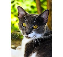 Yellow Eyes Photographic Print