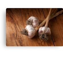 natural garlic  Canvas Print