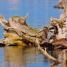 Blue Heron by MrJohnny68