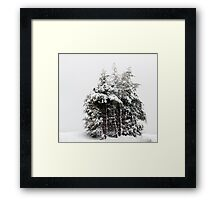 Wintry Cedars Framed Print