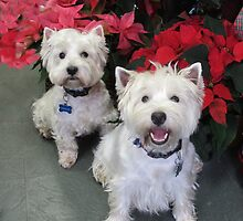 White Westie Christmas by MarianBendeth