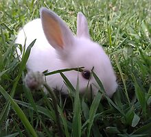 My new little bunny, Wilbur by Kayley Hodson