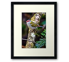 Red Browed Finch... Framed Print