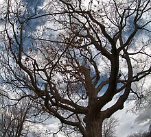 Wicked Haunted tree at Watertown N.Y. Park Zoo by Robert Smith