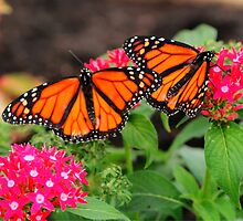 Monarch Pair by Larry Trupp