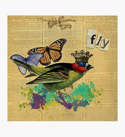 Vintage Bird Illustration Altered Art Collage Photographic Print