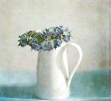 Hydrangea by Jill Ferry
