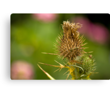 Wild Thistle Canvas Print